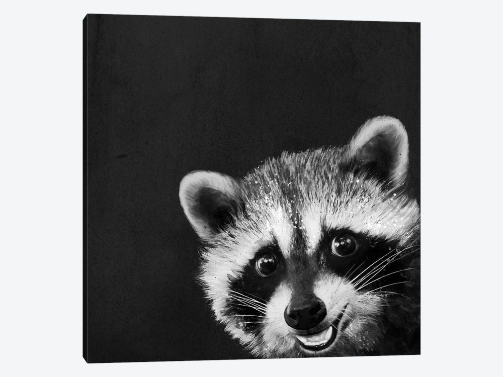 Raccoon by Laura Graves 1-piece Canvas Art