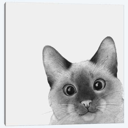 Siamese Sneak A Peek Canvas Print #GRV56} by Laura Graves Canvas Art Print
