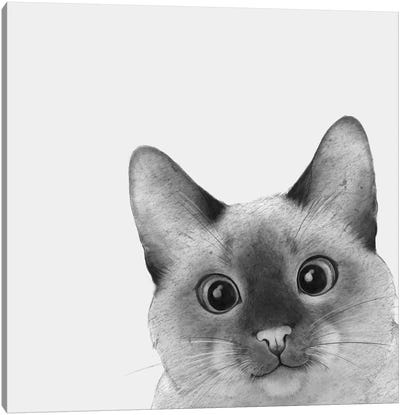 Siamese Sneak A Peek Canvas Art Print