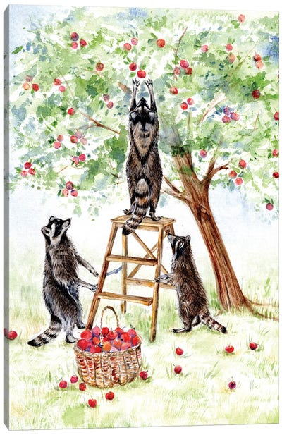Apple Harvest Canvas Art Print