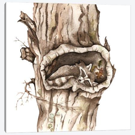 Sleeping Raccoon In Tree Hollow Canvas Print #GSI58} by Goosi Canvas Art