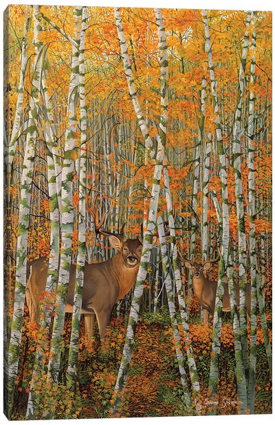 Autumn Stags Canvas Art Print