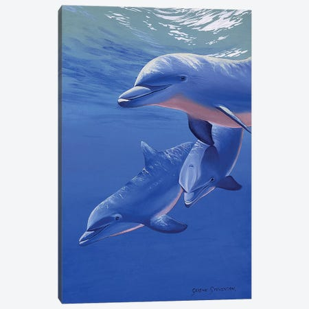 Dolphin Smile Canvas Print #GST155} by Graeme Stevenson Canvas Wall Art