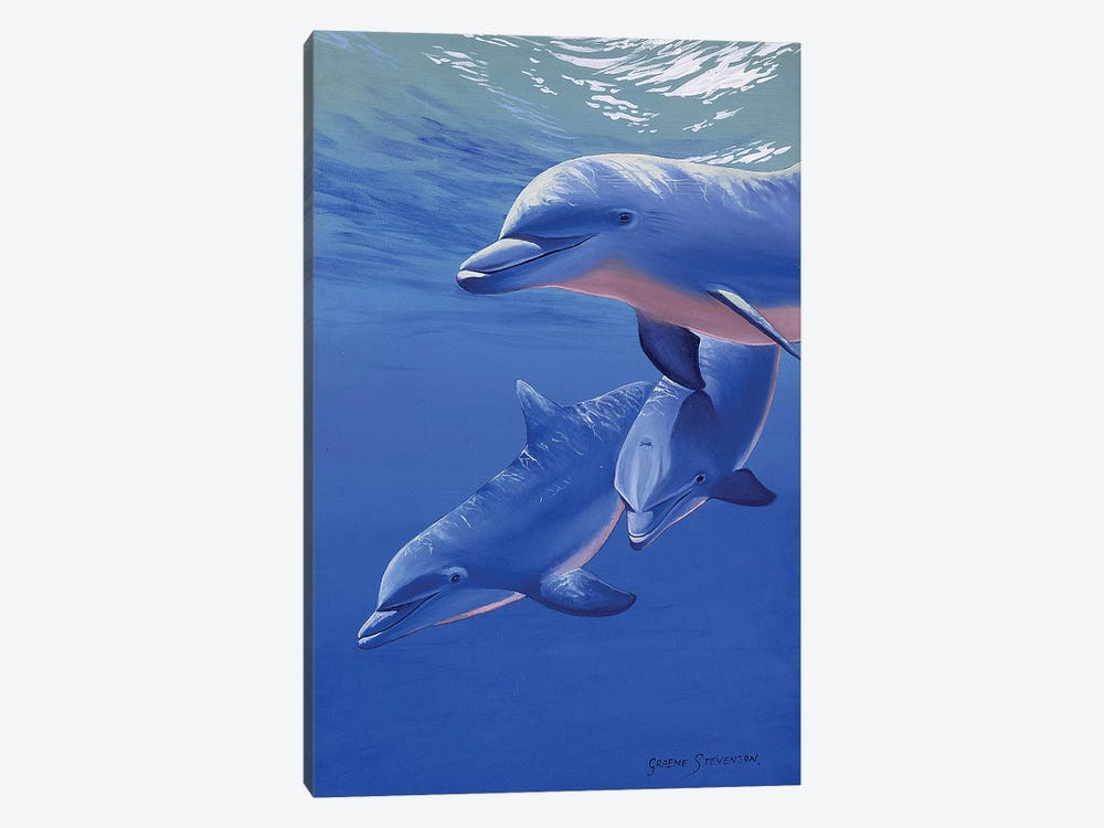 Dolphin Smile 1-piece Canvas Art Print