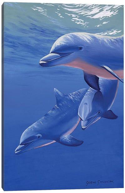 Dolphin Smile Canvas Art Print