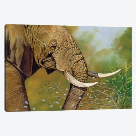 Elephant Days Canvas Print #GST169} by Graeme Stevenson Canvas Art