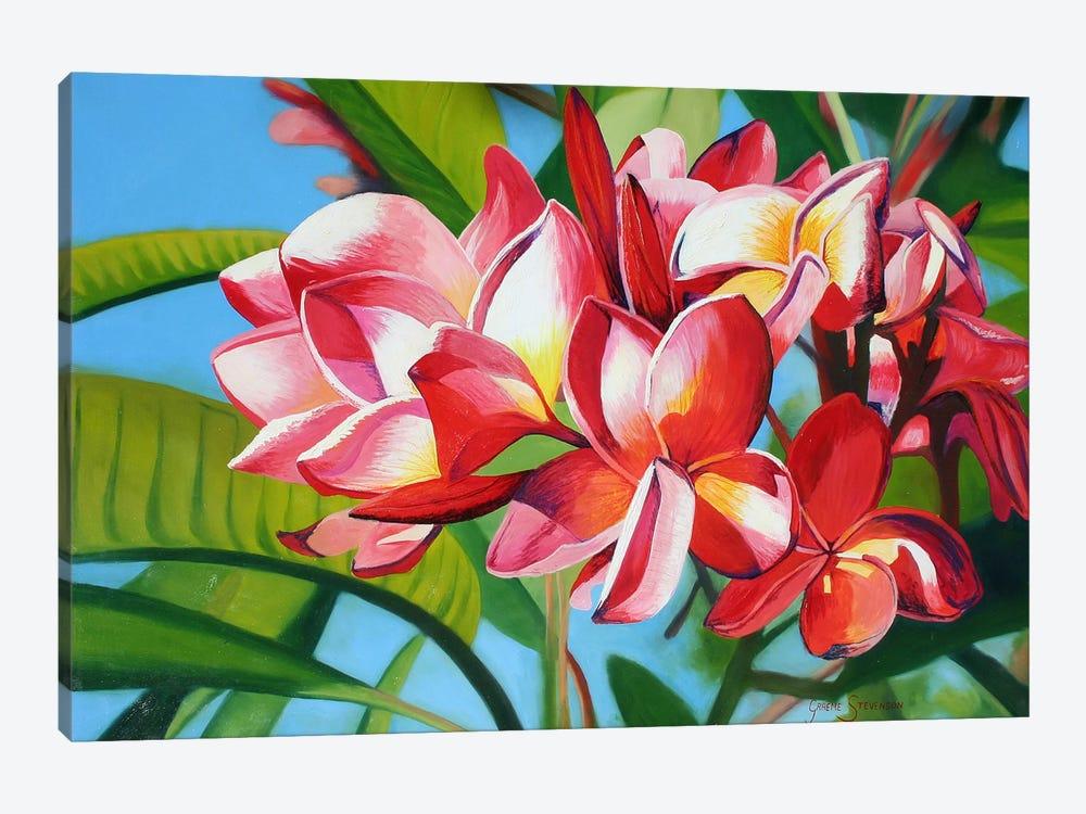 Flowers by Graeme Stevenson 1-piece Canvas Wall Art