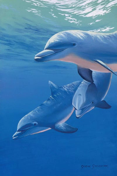 Dolphins Canvas Wall Art ICanvas