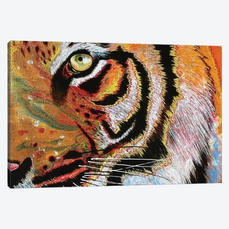Tiger Burning Bright 3-Piece Canvas #GST317} by Graeme Stevenson Canvas Art
