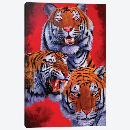Tigers 3-Piece Canvas #GST323} by Graeme Stevenson Canvas Art