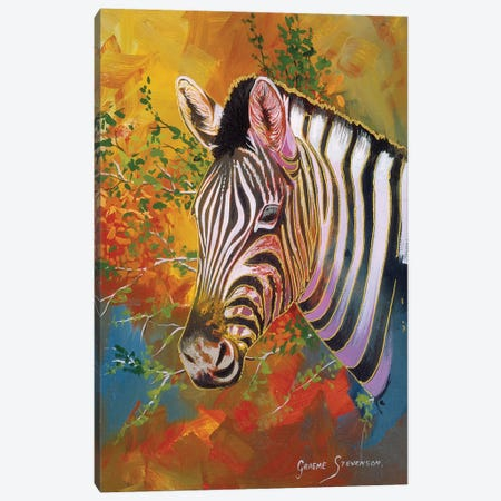 Zebra Days Canvas Print #GST348} by Graeme Stevenson Canvas Art