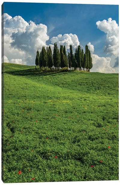 Italy, Tuscany, Pines hillside Canvas Art Print