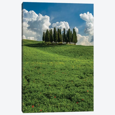 Italy, Tuscany, Pines hillside Canvas Print #GTH14} by George Theodore Canvas Print