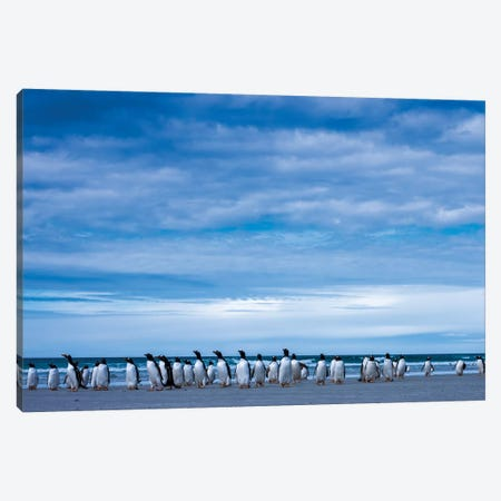 Antarctic, Gentoo penguin group Canvas Print #GTH1} by George Theodore Canvas Art