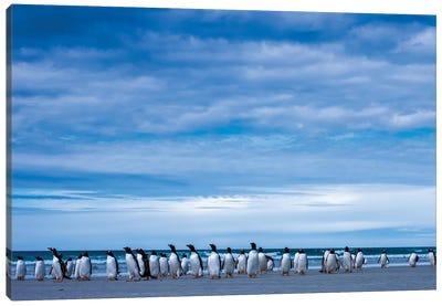 Antarctic, Gentoo penguin group Canvas Art Print
