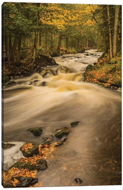 USA, Michigan, Fall Colors, Stream Canvas Art Print