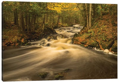 USA, Michigan. Fall Colors, Stream Canvas Art Print
