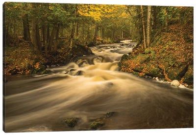 USA, Michigan. Fall Colors, Stream Canvas Art Print