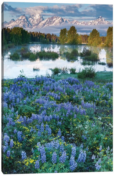 USA, Wyoming. Grand Teton National Park, Tetons, flowers foreground Canvas Art Print