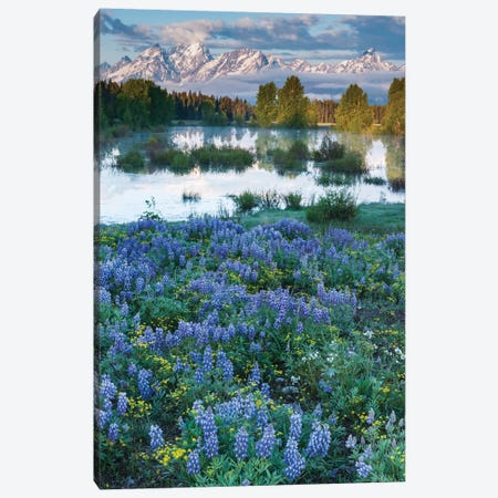 USA, Wyoming. Grand Teton National Park, Tetons, flowers foreground Canvas Print #GTH28} by George Theodore Canvas Art Print