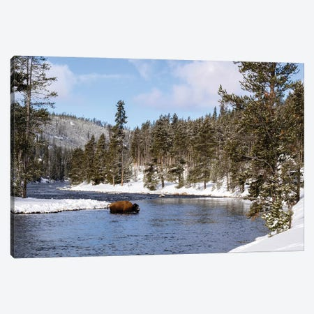Yellowstone National Park, bison crossing river in winter Canvas Print #GTH35} by George Theodore Canvas Art Print