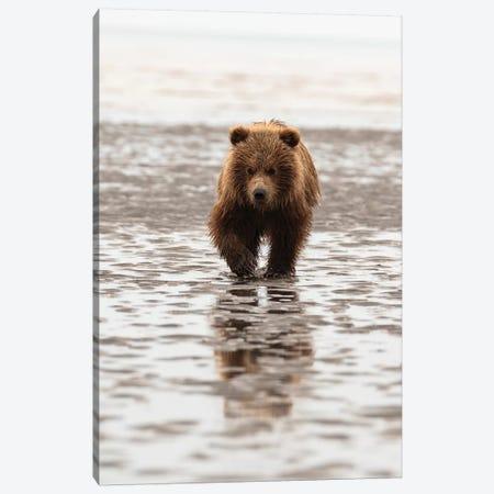Alaska, Usa. Grizzly Bear Walking Through Mud. Canvas Print #GTH38} by George Theodore Canvas Art