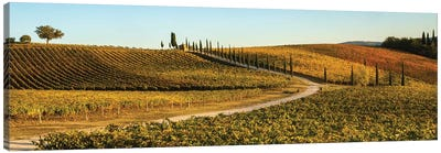 Italy, Tuscany, Vineyard, Late Light Canvas Art Print