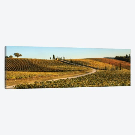 Italy, Tuscany, Vineyard, Late Light 3-Piece Canvas #GTH45} by George Theodore Canvas Art