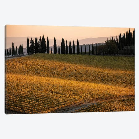 Italy, Tuscany, Vineyard, Late Light Canvas Print #GTH46} by George Theodore Canvas Artwork