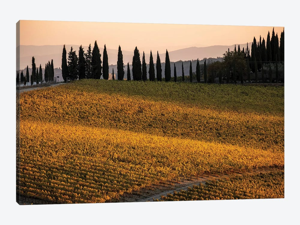 Italy, Tuscany, Vineyard, Late Light by George Theodore 1-piece Canvas Art