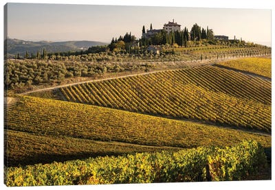 Italy, Tuscany. Vineyard In Autumn. Canvas Art Print