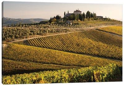 Italy, Tuscany. Vineyard In Autumn. Canvas Art Print