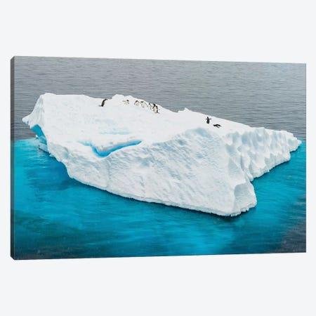 Antarctica, Gentoo, penguins, iceberg Canvas Print #GTH5} by George Theodore Canvas Art Print