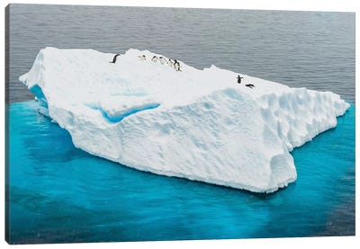 Antarctica, Gentoo, penguins, iceberg Canvas Art Print