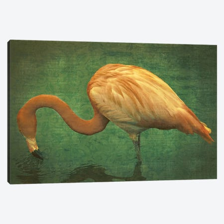 Caribbean Flamingo Canvas Print #GTS4} by Graffi*Tee Studios Canvas Art Print