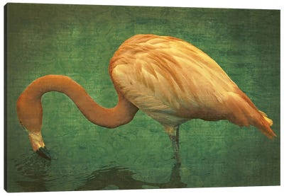 Caribbean Flamingo Canvas Art Print