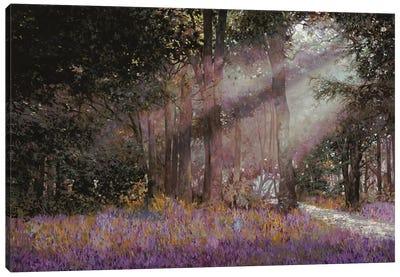 Luci Canvas Art Print