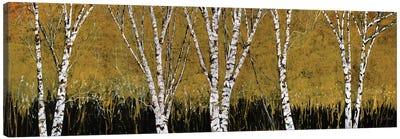 Betulle A Sfondo Giallo Canvas Art Print