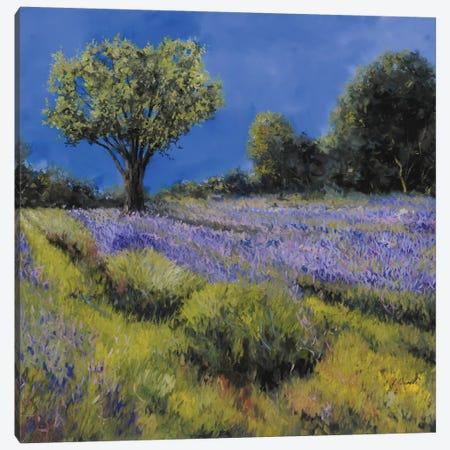 Il Campo Di Lavanda Canvas Print #GUB77} by Guido Borelli Canvas Wall Art