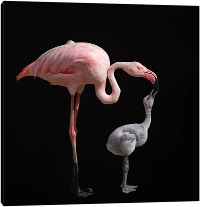 Become Pink Canvas Art Print