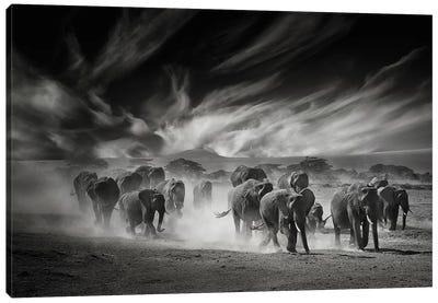 The Sky, The Dust And The Elephants Canvas Art Print