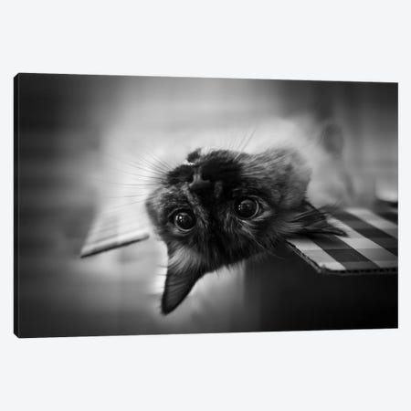 Upside Down Canvas Print #GUO1} by Leah Guo Canvas Art