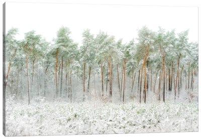 Snow World Canvas Art Print