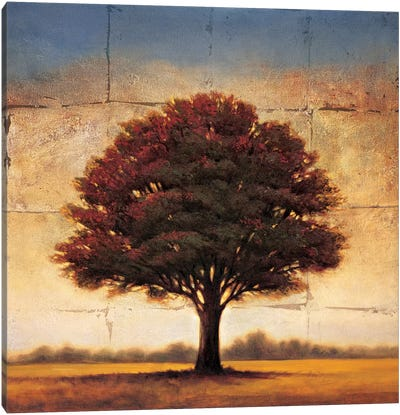 Splendor I Canvas Art Print