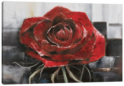 Blooming Red Rose Canvas Art Print