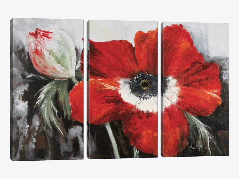 Poppy In Full Bloom by Rian Withaar 3-piece Art Print