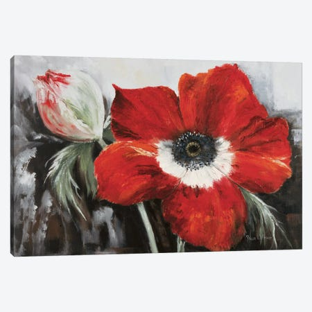 Poppy In Full Bloom Canvas Print #HAA7} by Rian Withaar Canvas Art Print
