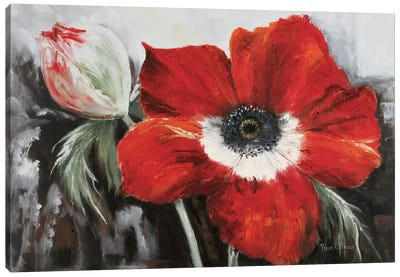 Poppy In Full Bloom Canvas Art Print