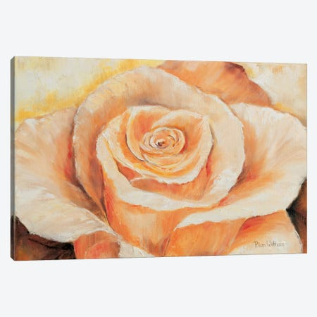 Rose In Detail Canvas Print #HAA8} by Rian Withaar Canvas Artwork