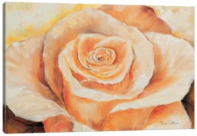 Rose In Detail Canvas Art Print